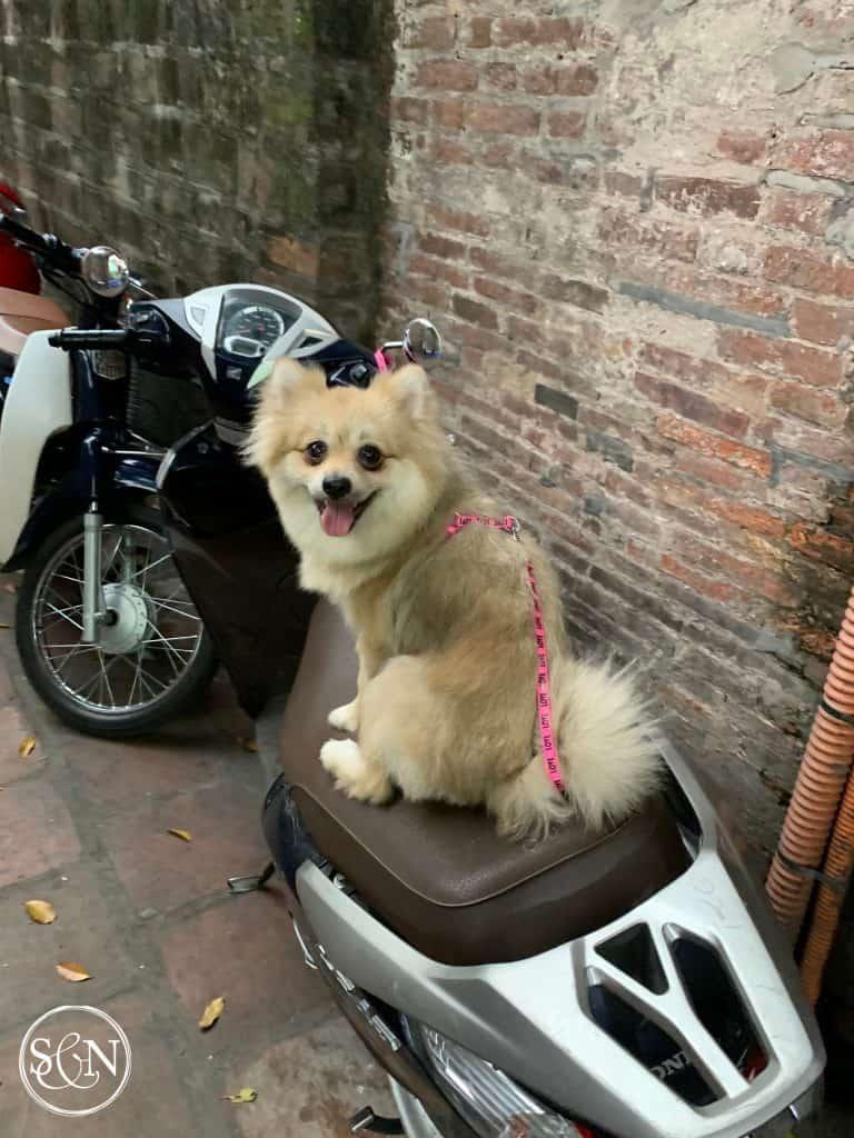Dogs of Vietnam