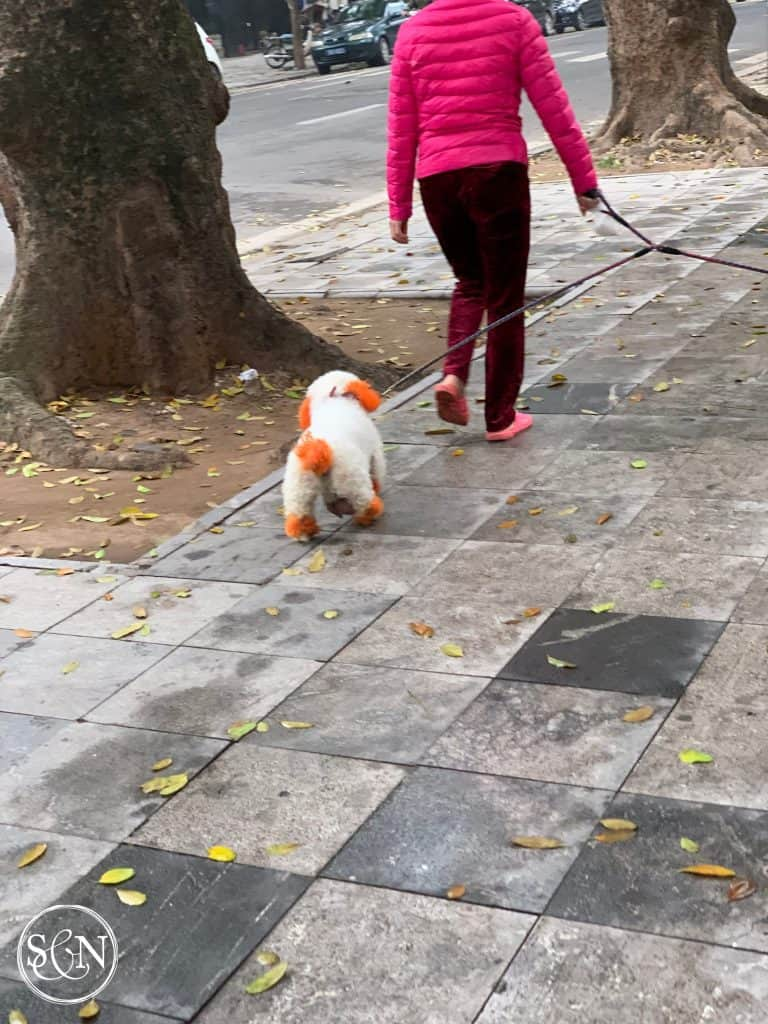 Colorful dogs of Vietnam