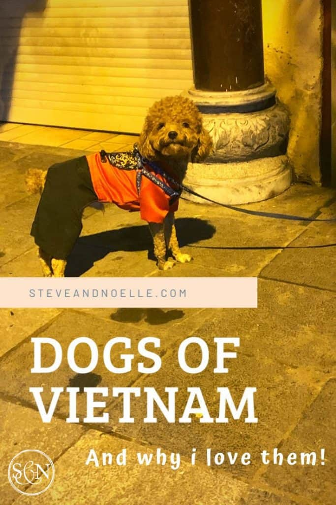 During this crazy Corona-time, I'm taking a minute to celebrate the dogs of Vietnam! Here's a whimsical look at man's best friend.